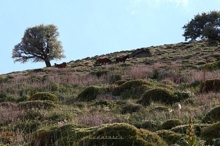 Karaman Karadağ-Yılkı Atları Ig_turko Turkey Hayatinrenkleri Foto_turk