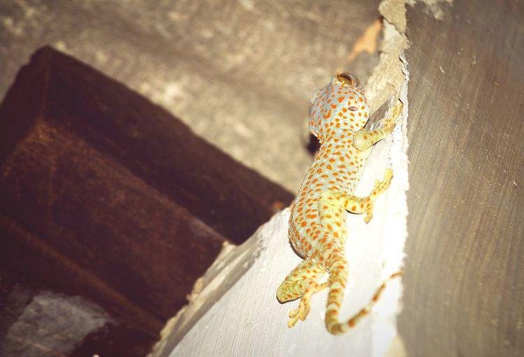 Close-up of gecko on wall