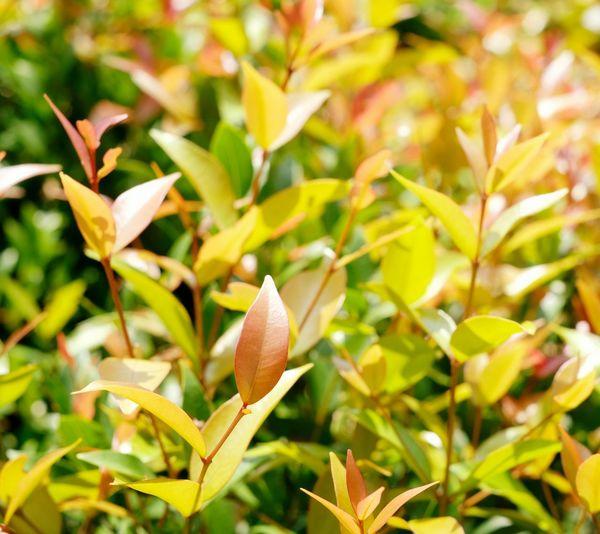 Leaf Autumn Close-up Plant Green Color