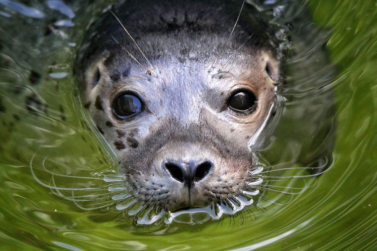 Close-up portrait of seal