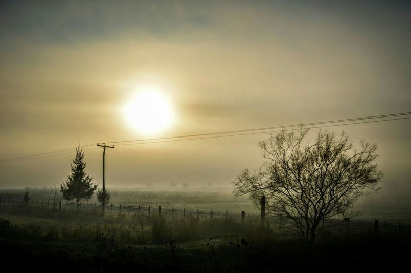 Foggy Morning Fog Foggy Day Niebla Mañana Landscape Sunrise The Great Outdoors - 2015 EyeEm Awards