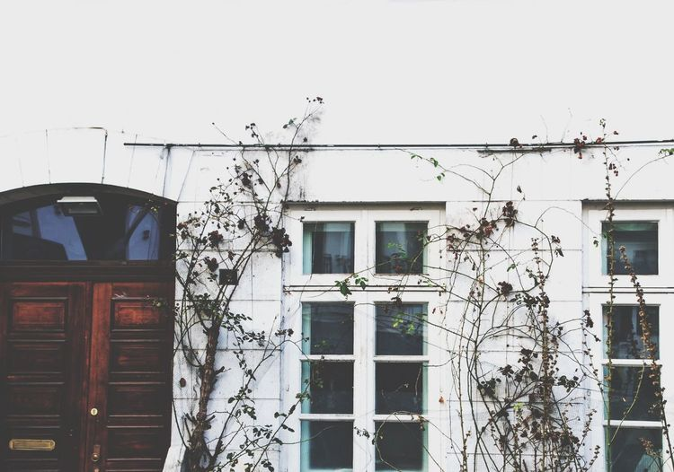 Tree Door White Wall EyeEmNewHere Building Exterior Architecture Built Structure Outdoors Window Day Residential Building Cable No People Low Angle View Sky