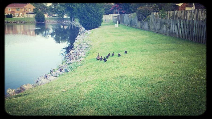 duckies First Eyeem Photo
