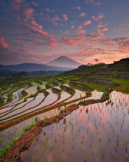 Scenic View Of Terraced Field Against Sky During Sunset