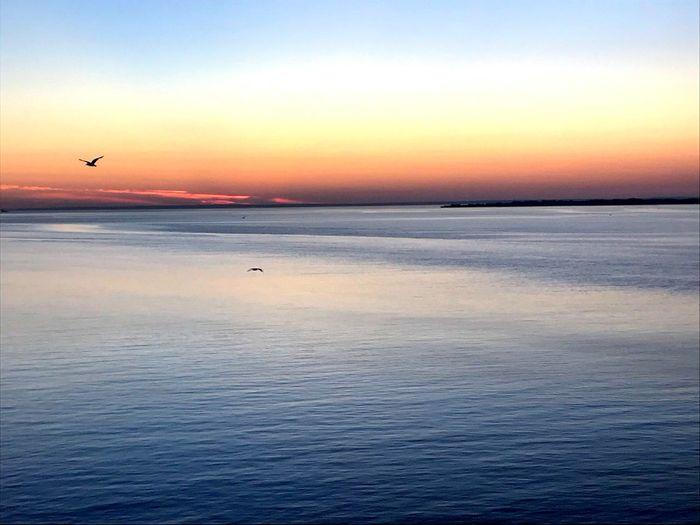 Scenics - Nature Sunset Sky Water Beauty In Nature Tranquil Scene Orange Color Tranquility Sea Idyllic Waterfront Horizon Over Water Animal Themes Vertebrate Animal Horizon Bird Nature Non-urban Scene No People