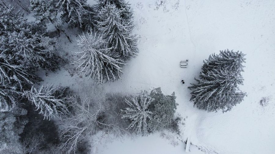 High angle view of frozen trees on snow covered field