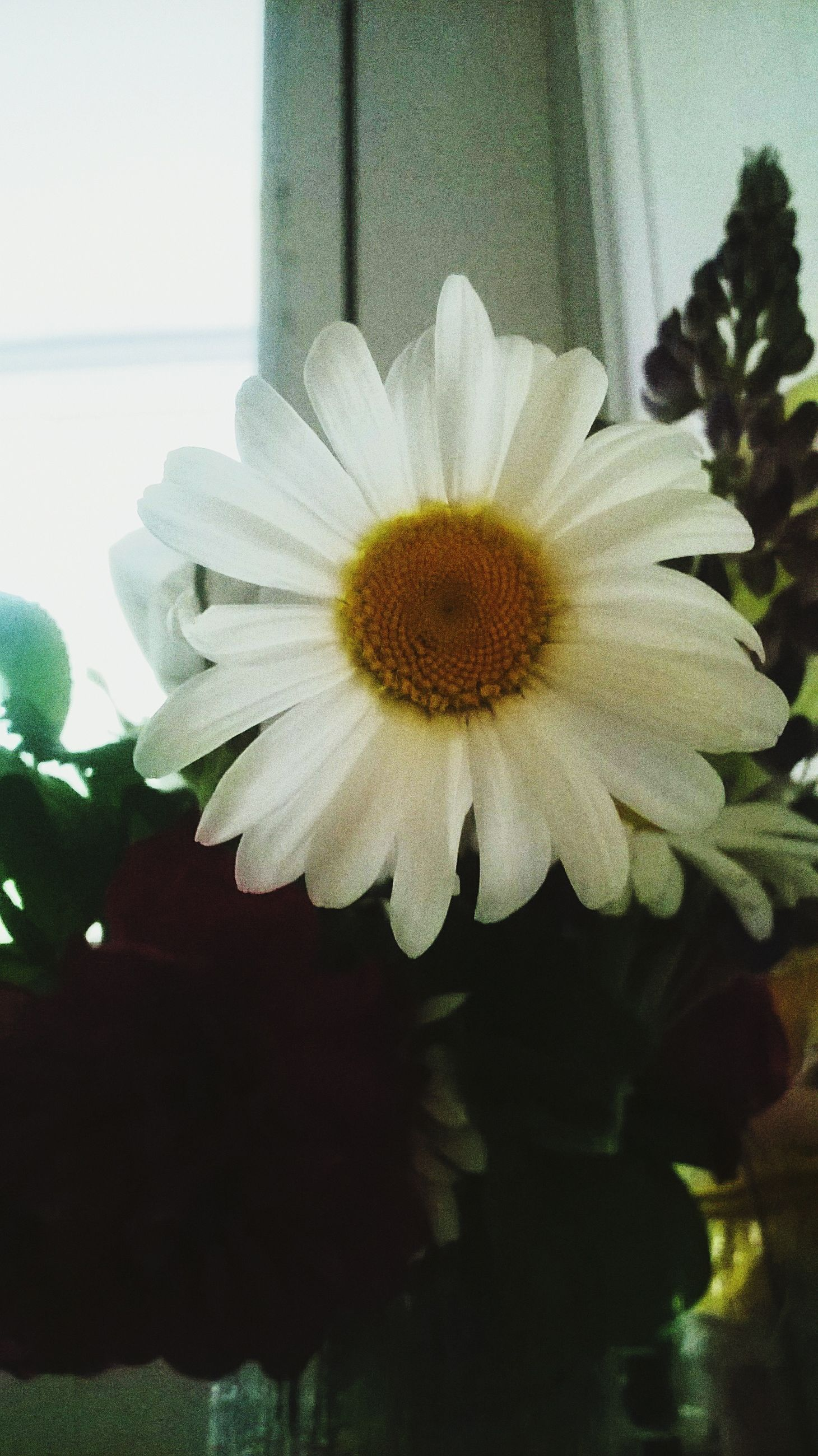 flower, petal, flower head, freshness, fragility, growth, white color, beauty in nature, close-up, single flower, blooming, pollen, plant, nature, indoors, daisy, in bloom, high angle view, no people, day