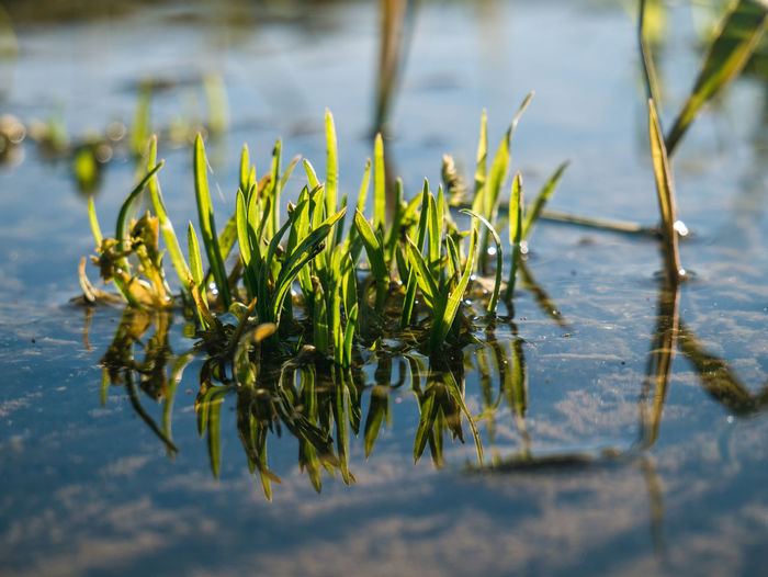 Nature. Water Plant Growth Nature Lake Beauty In Nature Day No People Leaf Plant Part Green Color Tranquility Outdoors Reflection Grass Close-up Selective Focus Focus On Foreground Waterfront First Eyeem Photo EyeEm 17.62°