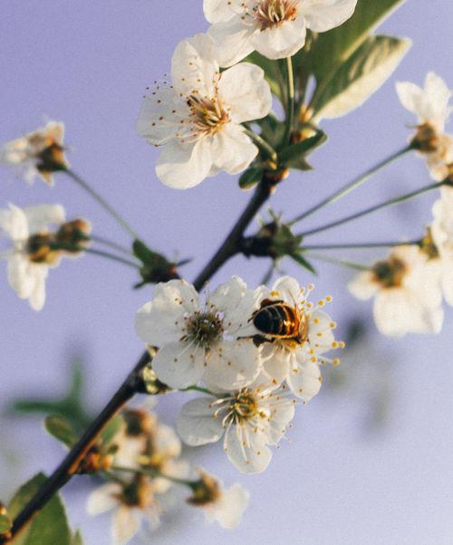 Bomb Botany Flower Fragility Nature Peachtree Petal Pollen Springtime Tree