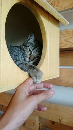 Cat Cafe Manila Cat Hand Pets Feline Bond Cat Portrait Portrait Animals Cat Lovers Touch The EyeEm Collection
