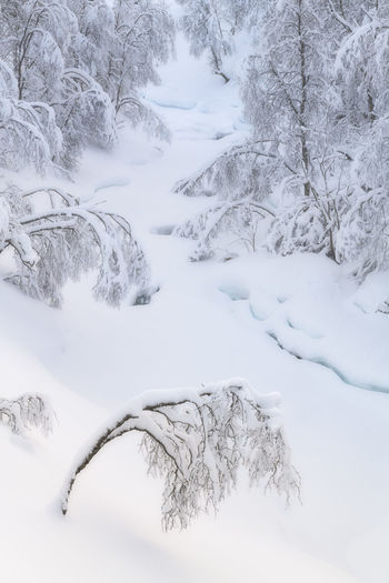 Scenic view of snow covered land and trees during winter