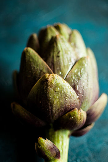 Fresh artichoke on a blue background Artichoke Flower Vegeterian Food Artichoke Artichokes Blue Background Colored Background Food Food And Drink Fresh Food Lover Fresh Vegetables Freshness Green Color Healthy Eating Nature Plant Raw Food Selective Focus Vegetable