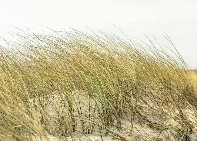 Baltic Sea Baltic Sea Winter Balticsea Beach Beach Day Beach Life Beach Photography Beach Time Beach Walk Beachphotography Darß Dune Dunes Fischland Fischland-darß-zingst Grass Marram Grass Ostsee Ostseeküste Ostseestrand Sand Sand & Sea Sand Dune Seaside Zingst
