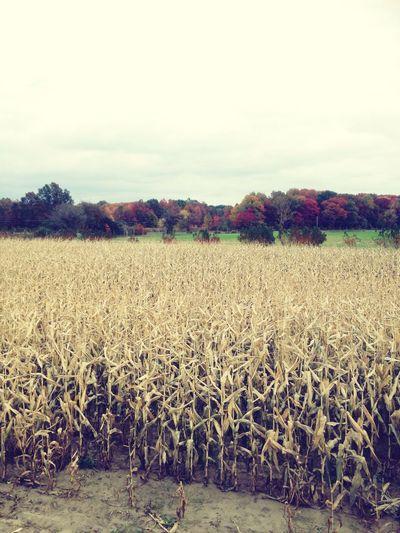 Johnsons Corner Farm Autumn Landscape