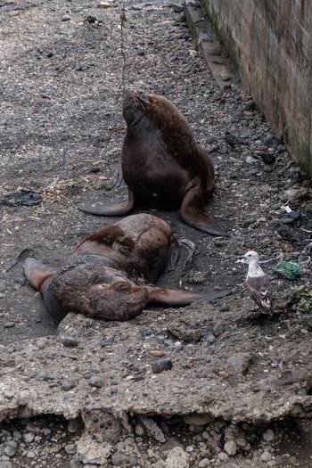 High angle view of two cats resting in zoo