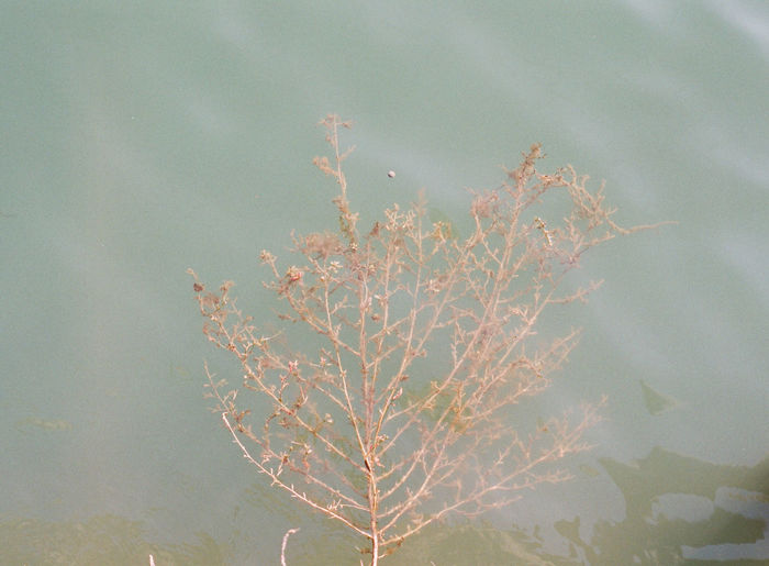 Tree under water Beauty In Nature Branch Close-up Day Growth Nature No People Outdoors Plant Sky Tree