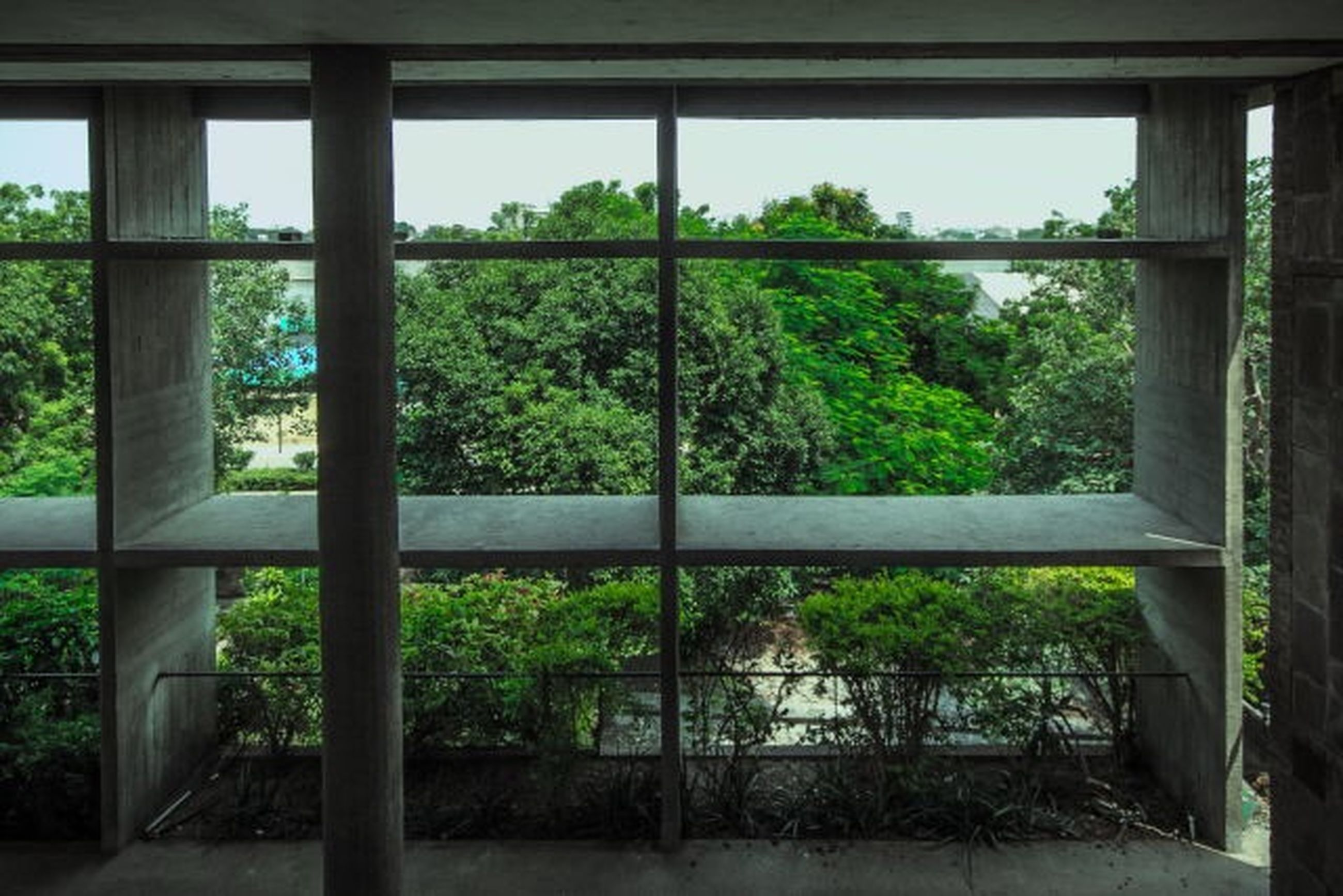 window, indoors, tree, glass - material, transparent, growth, plant, green color, built structure, house, day, architecture, looking through window, sunlight, nature, no people, glass, railing, open, home interior