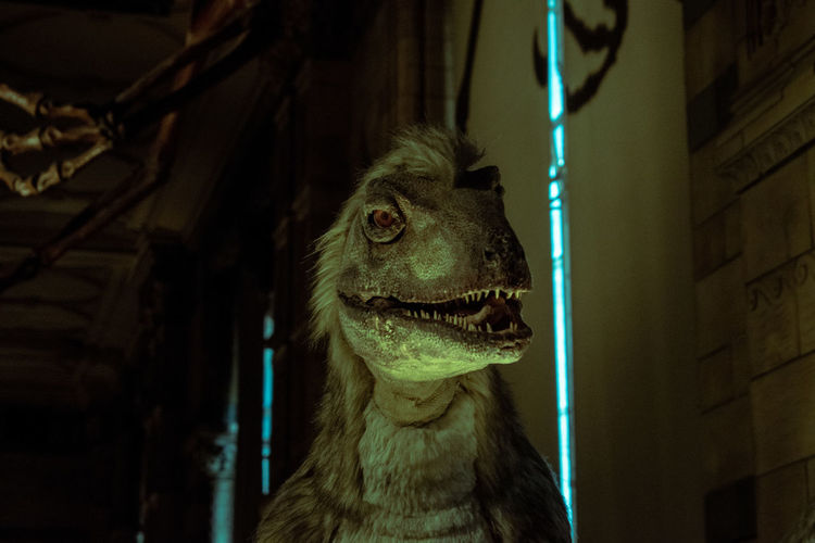 Dinosaur Reptile Animal Animal Body Part Animal Head  Animal Themes Canine Close-up Dog Domestic Domestic Animals Focus On Foreground Indoors  Looking Looking Away Mammal Mouth Open No People One Animal Pets Portrait Predator Vertebrate