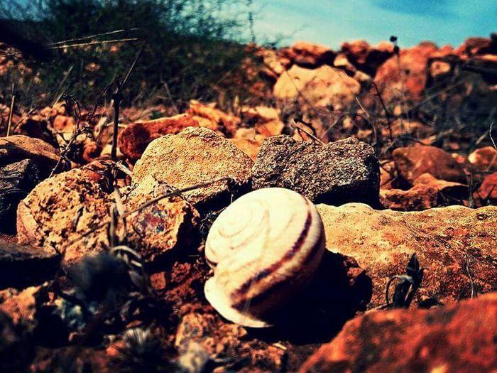 Mirleft Life Mirleft Taking Photos Escargot