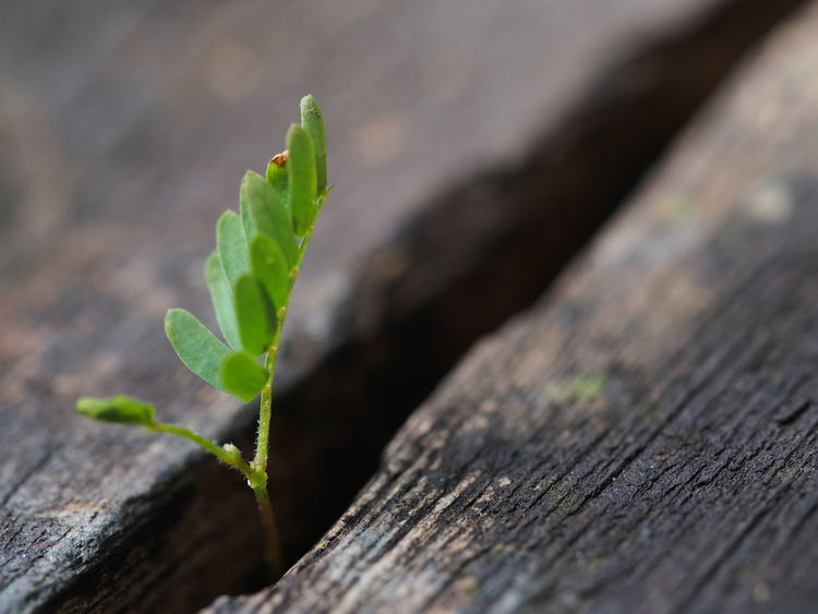 Life Through The Cracks Baby Plant Beauty In Nature Beginnings Birth Close-up Fragility Green Color Growth Leaf Nature New Life Seedling Sprout Young Plant