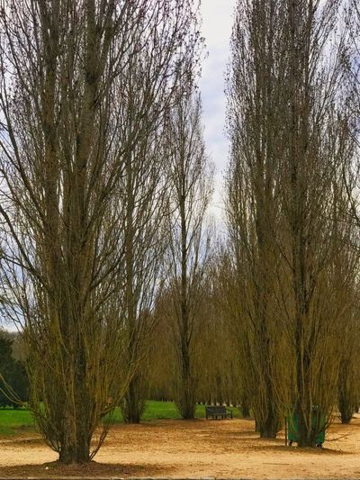 Versailles gardens 🇫🇷 Bench Bare Tree Beauty In Nature Branch Day Environment Field Growth IPhoneography Land Landscape Nature No People Outdoors Plant Scenics - Nature Sky Tranquil Scene Tranquility Tree Tree Trunk Treelined Trunk