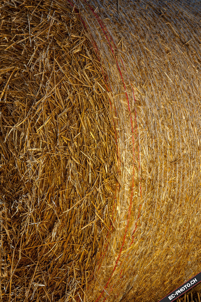 hay, straw, no people, brown, full frame, close-up, backgrounds, outdoors, day, hay bale