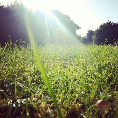 Sun Nature Sonne Grün Gras  Pics By Mr_badabing