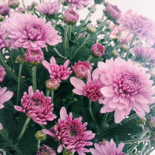 Flowers Vscocam