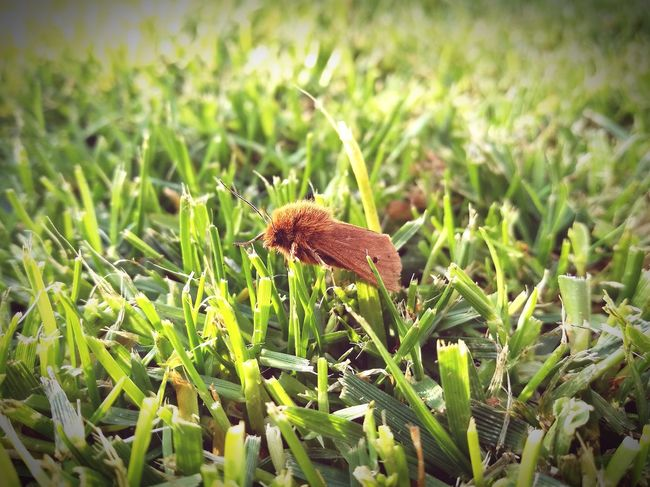 Grass Nature Green Color No People Outdoors Beauty In Nature Animal Themes Insect Freshness Butterfly - Insect Moth