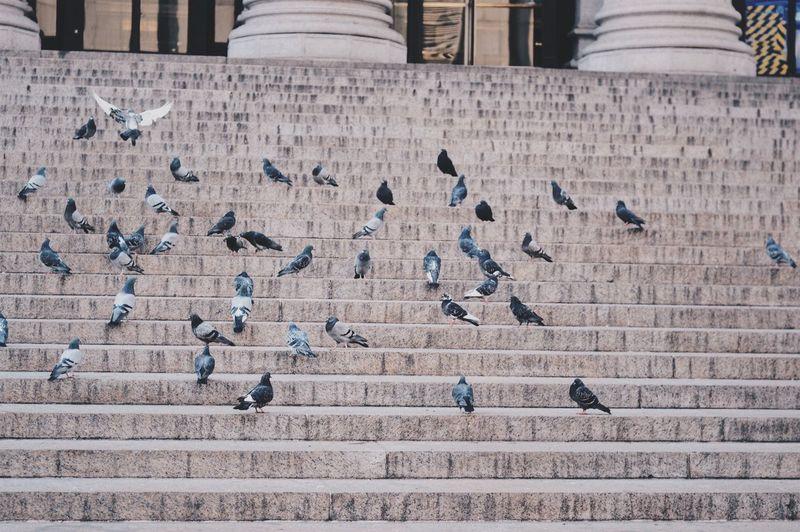 Birds in city