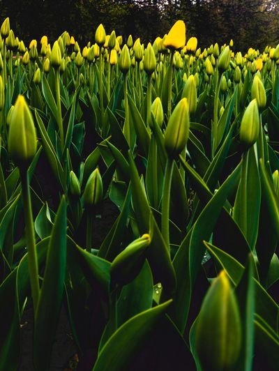 Growth Plant Green Color Beauty In Nature Plant Part Leaf Nature Freshness Yellow Flowering Plant Vulnerability  No People Day Close-up Field Flower Land Agriculture Outdoors Tranquility