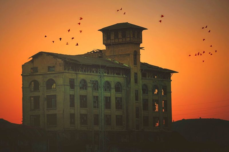 Adapted To The City Architecture Building Exterior Built Structure Sunset Sky Outdoors No People Bird Animal Themes Day Nature Landscape Travel City Street Orange Color Sky Relaxing Animals In The Wild
