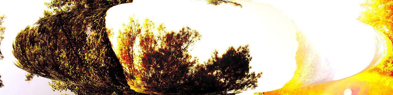 Branch Nature Outdoors Rural Scene Softness Springtime Tranquil Scene Tree