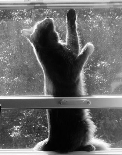 Kittens Playful Cat Cat In Window Wedged In Between Predicaments Fuzzy Cat Furry Friend Cat Grey Cat Water People One Person Human Hand Indoors  Adult Day Adults Only One Man Only Reaching The Top Reaching Grabbing Soft Touch Gentle Curiosity Curious Cats