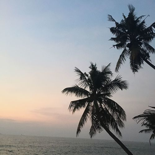 Palm Tree Sea Tree Beach Beauty In Nature Scenics Nature Tranquility Tranquil Scene Sky Sunset Water Silhouette Horizon Over Water Outdoors No People Clear Sky Day Day Well Spent Evening Light Arabian Sea Kerala GodsOwnCountry