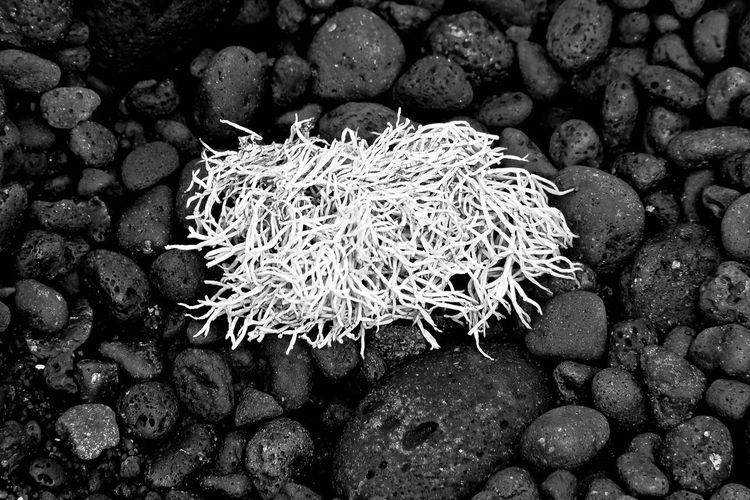 Noir et blanc Nature No People Rock Water Sea Beauty In Nature Solid Close-up Rock - Object Plant Day Marine Animal Lanzarote Bnw_collection