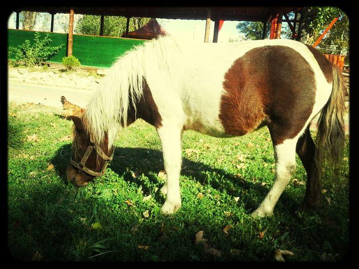 lovely pony:)