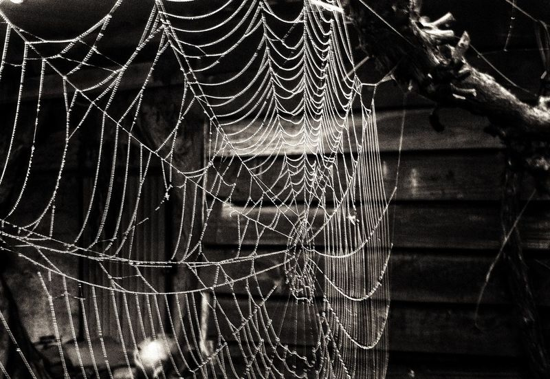 Spider Web No People Outdoors Beauty In Nature Nature