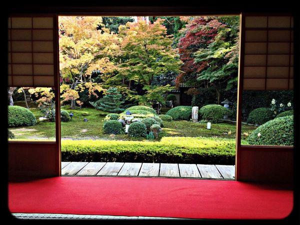 雲龍院 大輪の間からの庭園 The Purist (no Edit, No Filter) Taking Photos Temple Garden