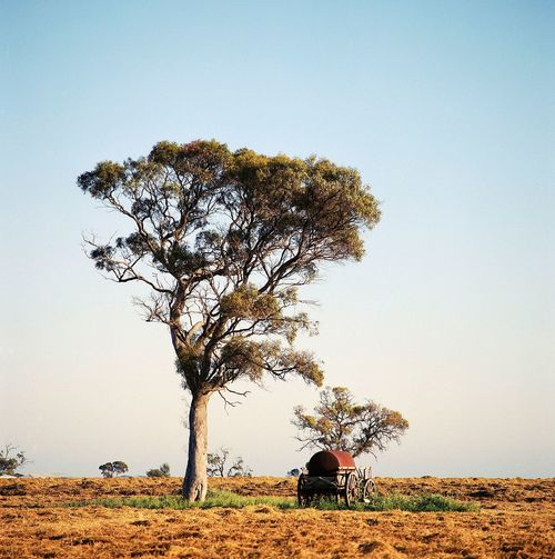 Wagon sits under a tree in a plowed field
