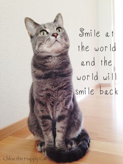 Smile at the world an the world will smile back (my cat Chloe) Tadaa Community Cute Pets Cat Lovers Cat Hello World Chloe The Cat Getting Inspired Smile Cute Cats Pet Photography