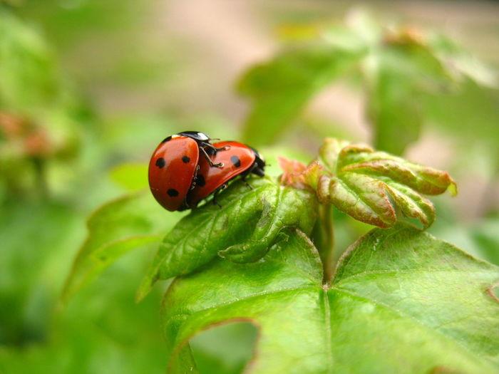 Close-up of ladybugs on plant