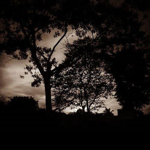 Fotocontraluz Arboles Fotografia Gallery Dioscreadordemaravillas Tj Beuteful Megusta Likeforlike Line4line Fotography Art Naturelovers Nature