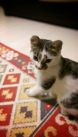 Kedi Cat Htcphotography Htconem8