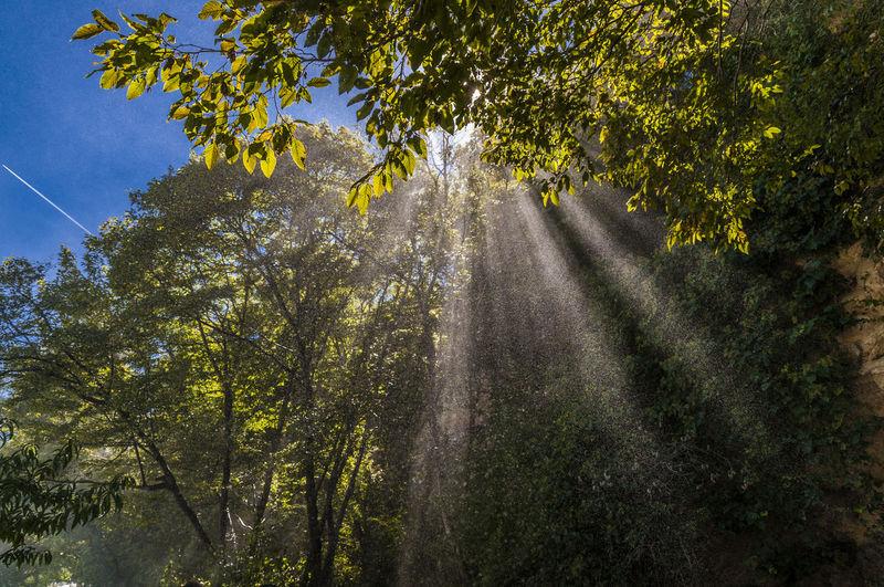 Sunlight falling amidst trees