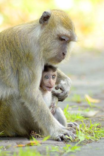 Close-up of monkeys sitting outdoors
