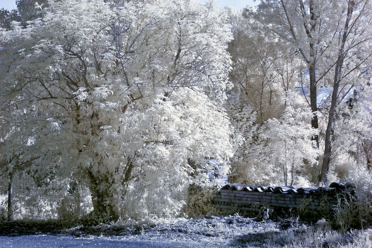 Snow covered plants against trees