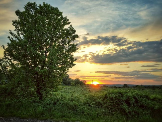 Countryside Sunset Plant Sky Sunset Beauty In Nature Tree Tranquility Scenics - Nature Cloud - Sky Tranquil Scene Growth Field Nature Land No People Orange Color Landscape Environment Green Color Sunlight