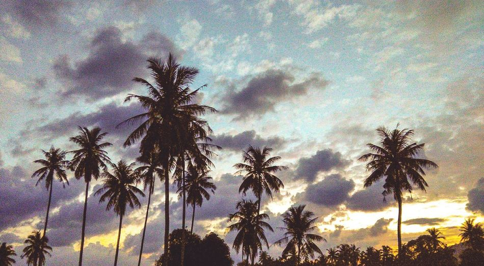 Coconut Lightroom Mobile Mobilegraphy Mobilephotography Tree Nature Silhouette Palm Tree Low Angle View Sky Growth Tree Trunk Beauty In Nature Cloud - Sky No People Outdoors Tranquility Scenics Day EyeEmNewHere