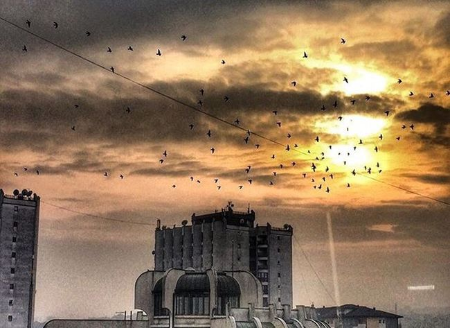 Bird Large Group Of Animals Flying Flock Of Birds Sky Animal Themes Animals In The Wild Animal Wildlife Building Exterior Cloud - Sky Architecture Built Structure No People Sunset City Outdoors Low Angle View Nature Day Cultures Novi Pazar Long Goodbye Long Goodbye The Secret Spaces
